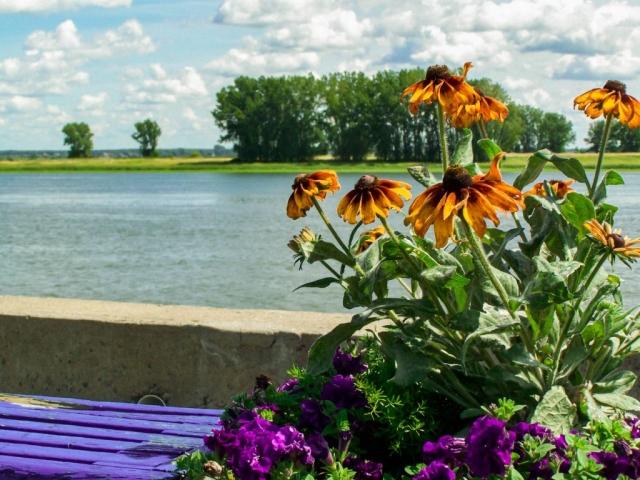 Fleurs sur banc bleu de Diane Pagé