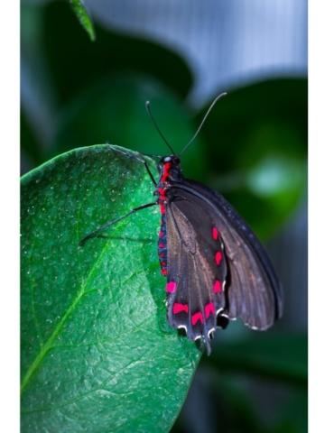 Pause , papillon