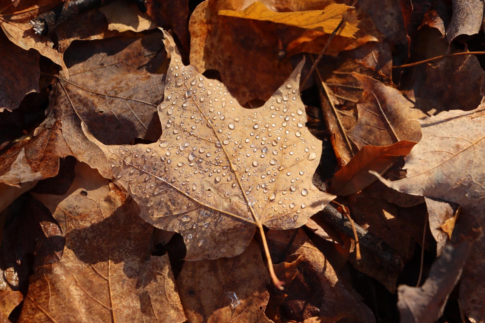 Rosée d'un matin d'automne